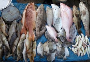 12-fish diversity at market